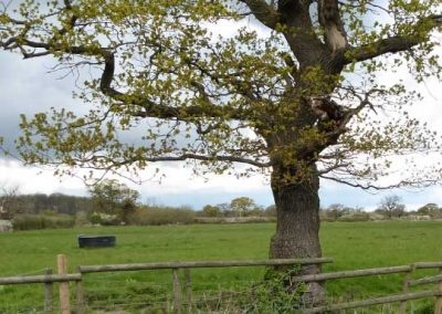 Pitch and Canvas | Glamping and Camping in Cheshire | Field with tree