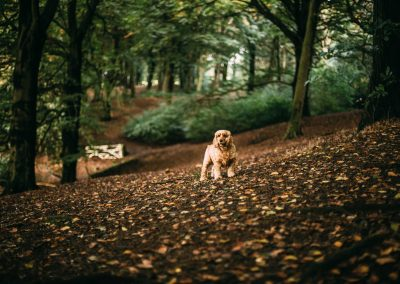 Pitch and Canvas | Glamping and Camping in Cheshire | Picture of dog in woods